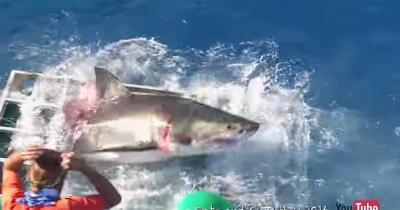 Польский серфер с ножом отбился от 11 акул в Красном море