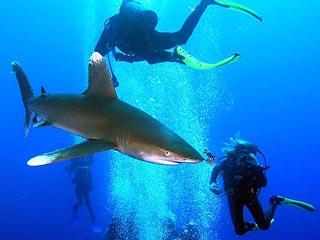 """В Австралии туристам """"пощекочут нервы"""" дайвингом с акулами"""
