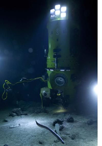 В самом глубоком месте планеты найдены причудливые организмы, хранящие тайну зарождения жизни