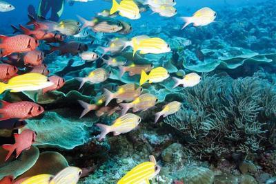 Наши дайверы исследовали воды Филиппин и Микронезии