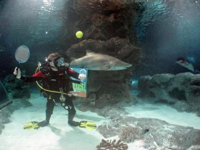 Экстремальный подводный теннис