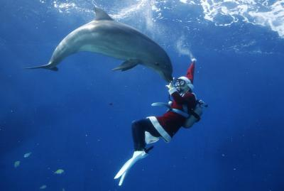 Новогодние представления с дельфинами